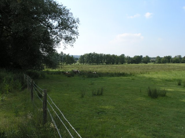 Cows relaxing in a field