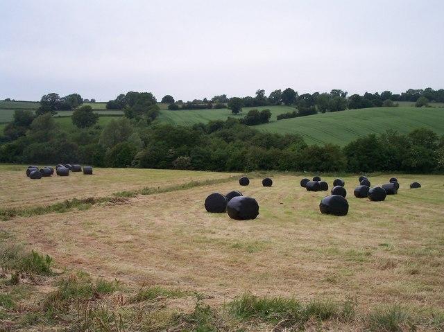 Wrapped Round Bales, Brockhampton Court