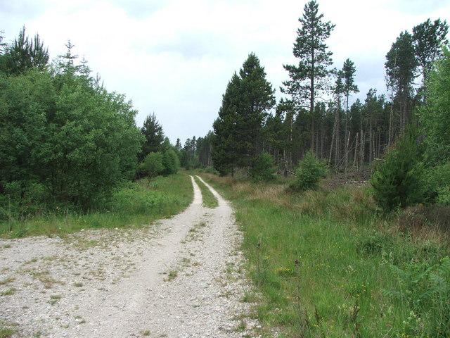 Forestry on Wilden Moor.