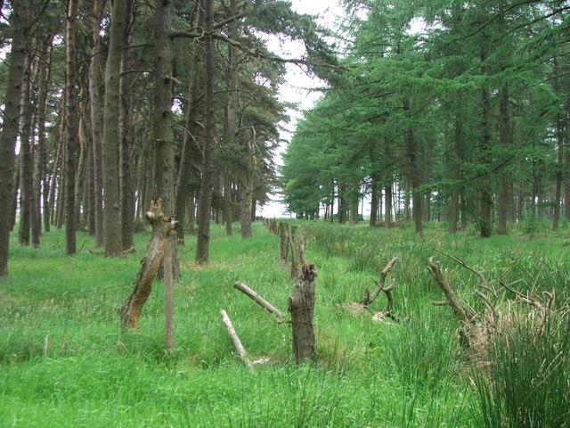 Woods at Brown Howe.