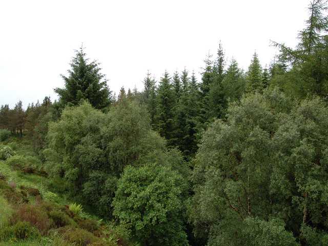 Woodland between Eilanreach and Sandaig