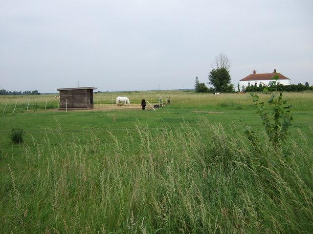 Farmland north of King's Lynn.
