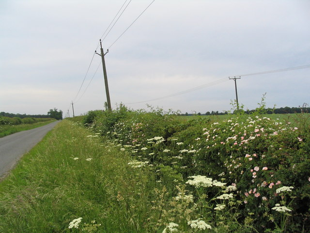 Hedgerow on road to Exton
