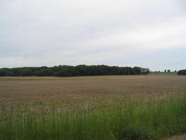 Set-aside field, Exton Park