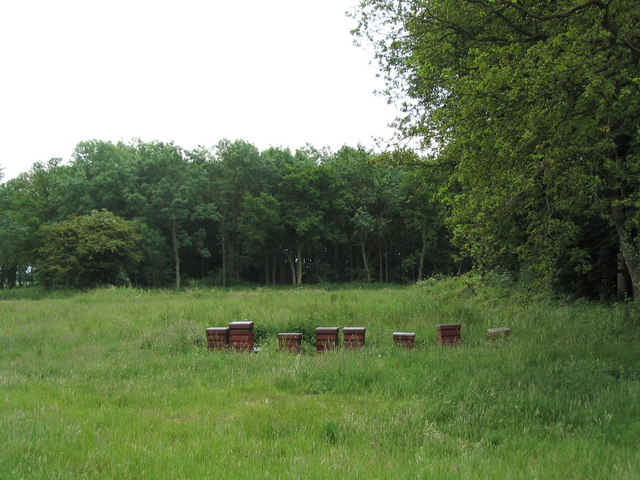 Hives at edge of Tunneley Wood