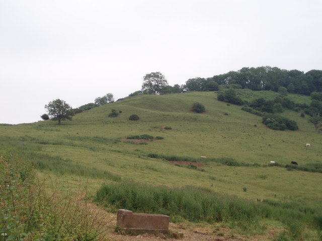 Launcherly hill and wood