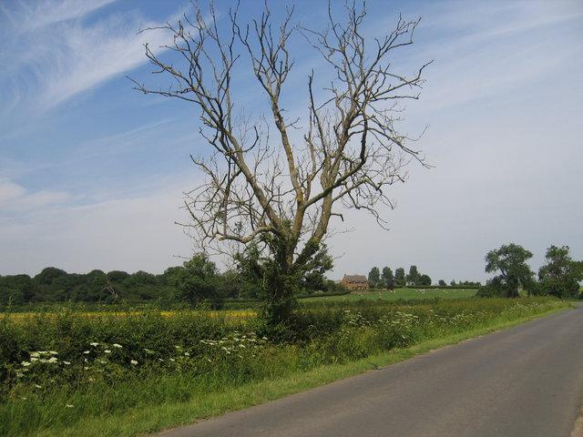 Lane to Whatcote