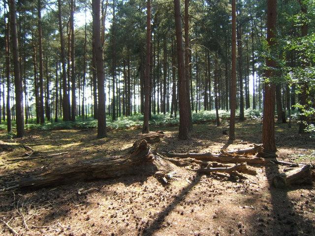 Blackheath Forest near Albury