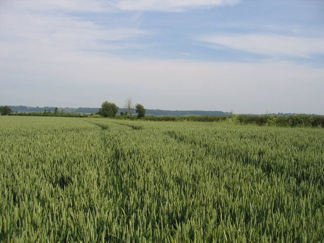 Field at the end of the lane