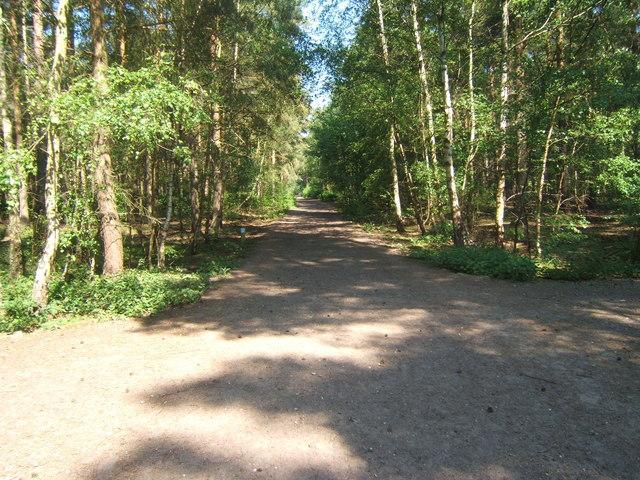 Bridleway in Blackheath Forest
