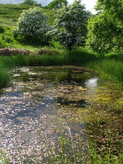 Pond, Balchroich Meadow