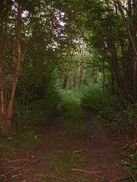 Track through dense woodland