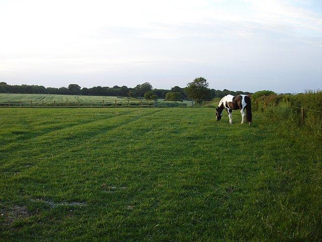 Paddock near Payden Street Farm