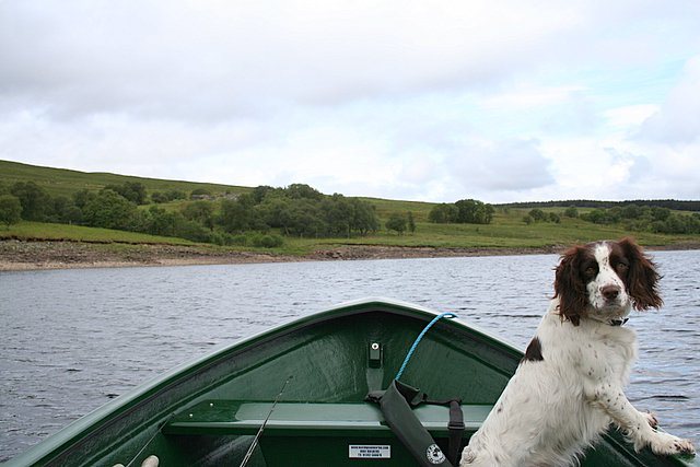 Angling along the Westerly shore of Loch Shin