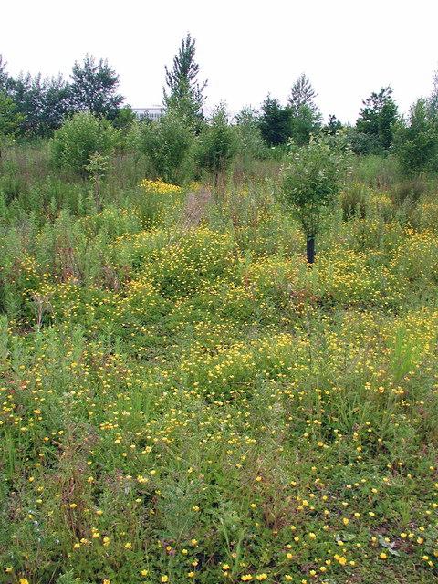 Wildflower meadow, Keyingham