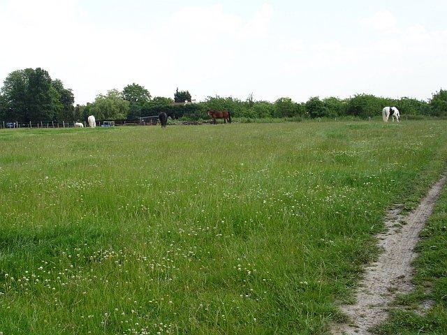 Paddock at Westmoor Farm