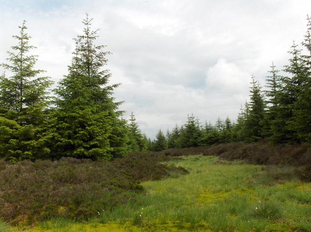 Bowsmuir Forest