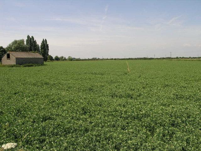 Millions of Peas