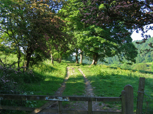 Sleights Road (Track) SE832898