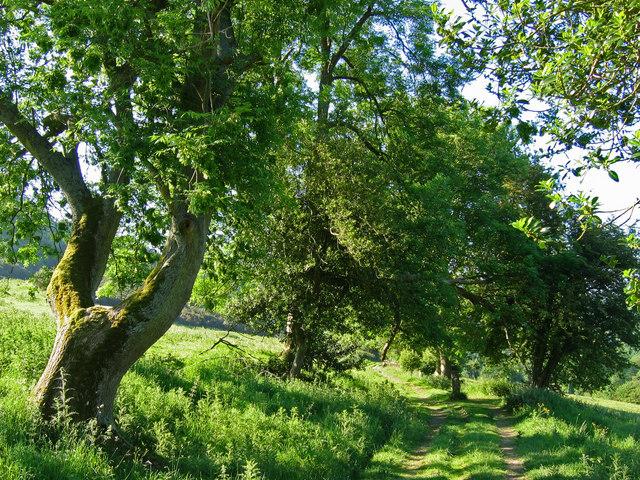 Sleights Road (Track) SE832894