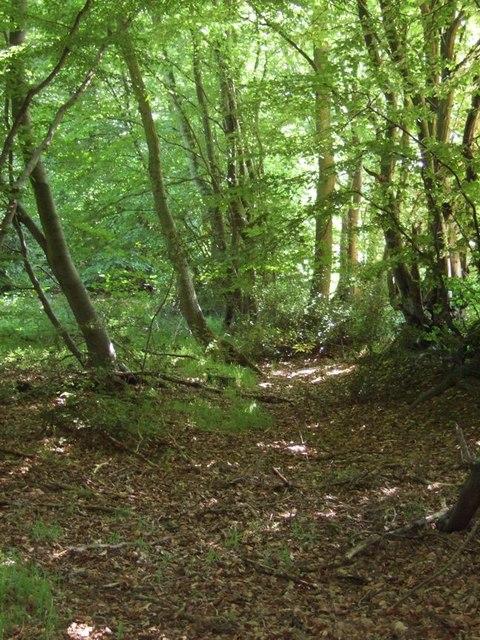 Glade near Ambers Farm
