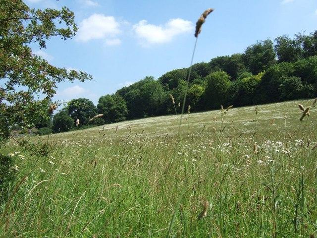 Pastureland, Chesham Vale