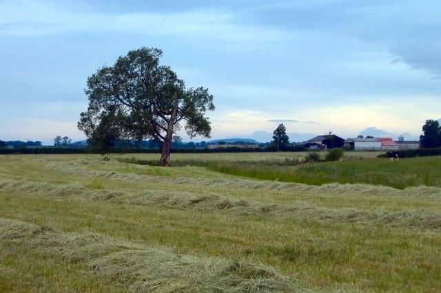 New Farm, Calveley