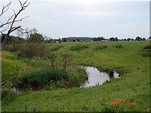SJ6260 : Bankside Brook, Wettenhall by Mike Harris