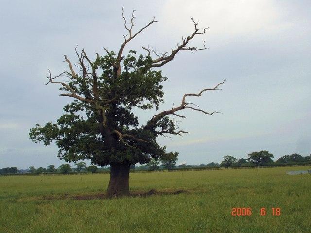 Blasted oak, Wettenhall
