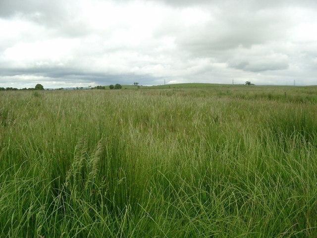 Rough pasture looking towards Burnhead