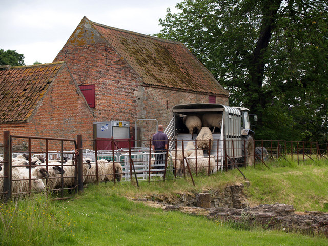 Abbot's Lodge Sheep Transportation