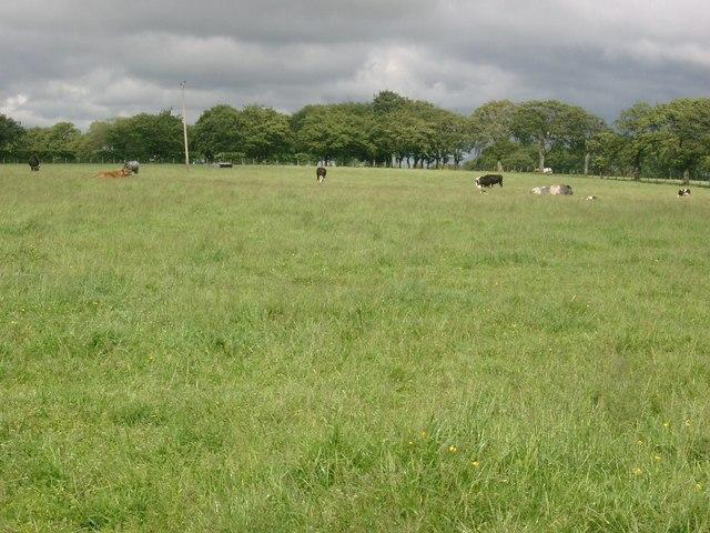 Pasture at Shawton