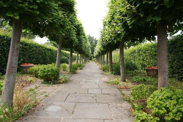 Lime Walk at Sissinghurst