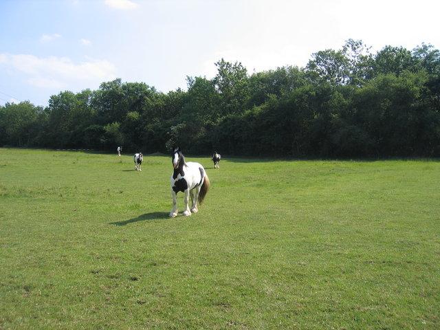Horses near Lenchwick