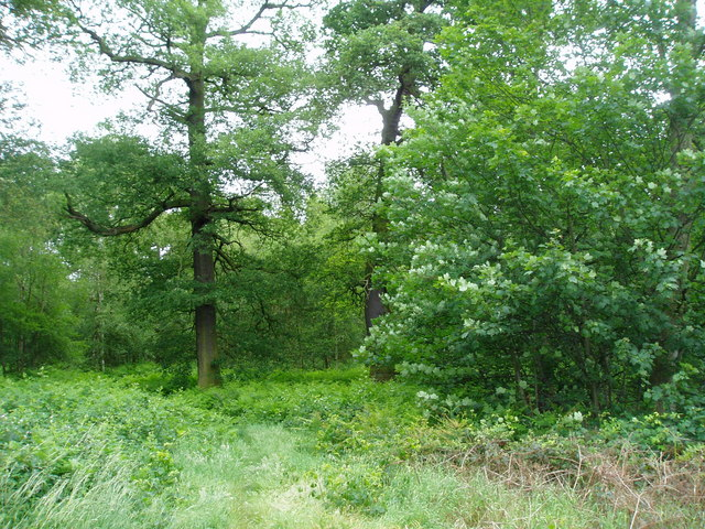 Chetwynd Forest