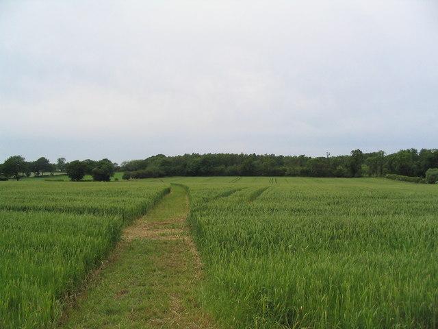 Bridleway through wheat to Addah Wood