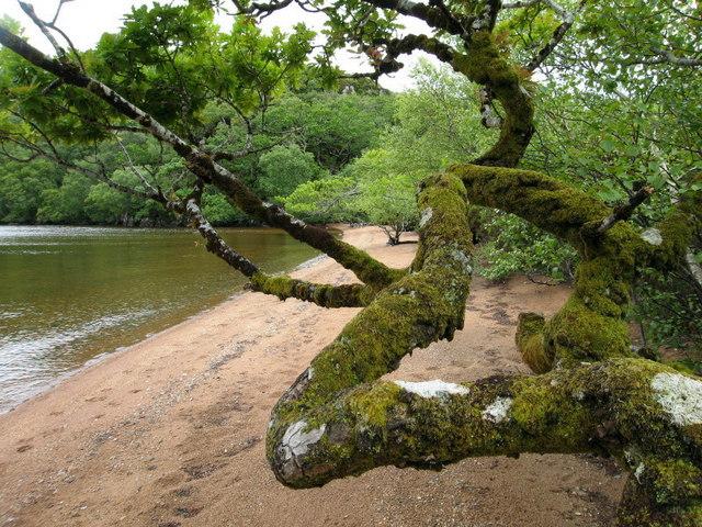Camus Ruadh, Loch Morar