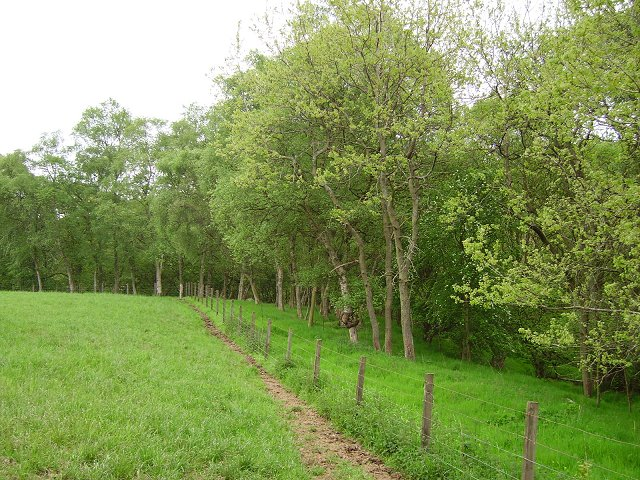 Burnbrae Wood