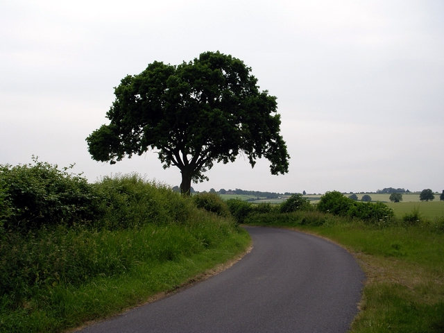 Tree and country road, east of Kilmeston