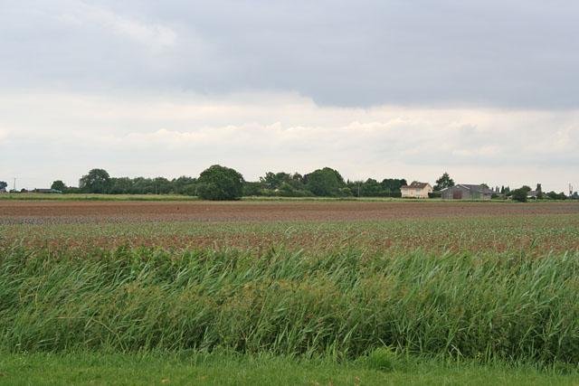 Farmland off Gubbole's Drove