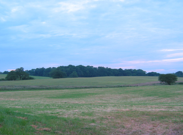 View towards Larder Wood