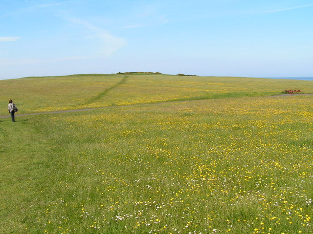 Footpath across a meadow, near Newton point
