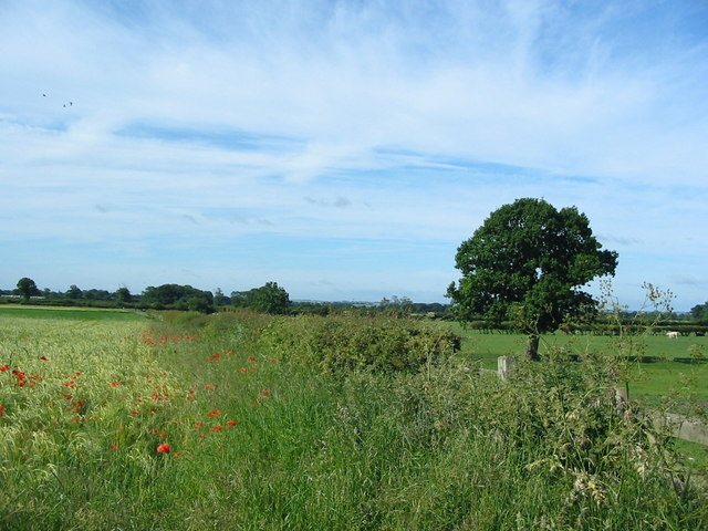 View toward the Howardian Hills from Broadrum Lane