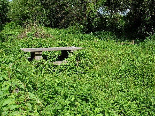 Picnic area, Berengrave nature reserve