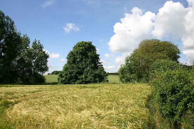 Field near Lidgate