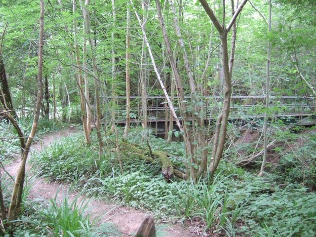 Footbridge in the Woods