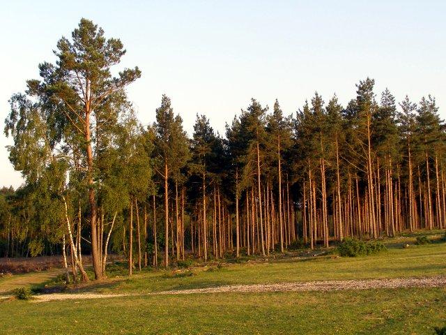 Northwest edge of the Longdown Inclosure, New Forest
