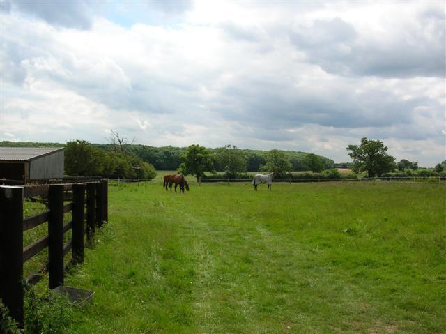 Horses - Bossall