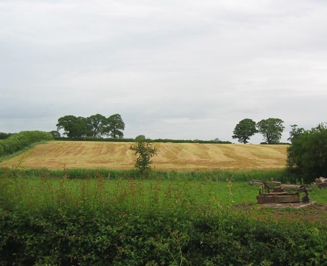 Mown field, Gauntons Bank