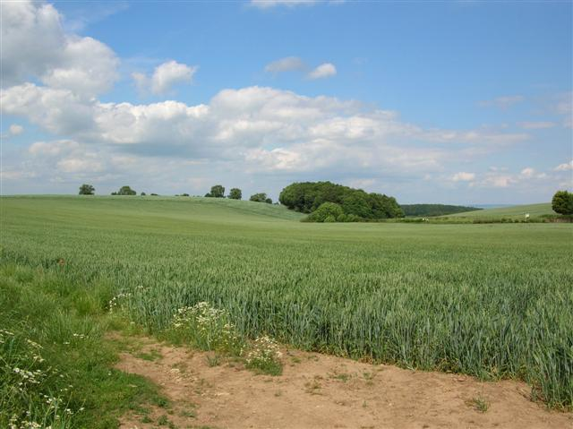 Farmland close to Westow